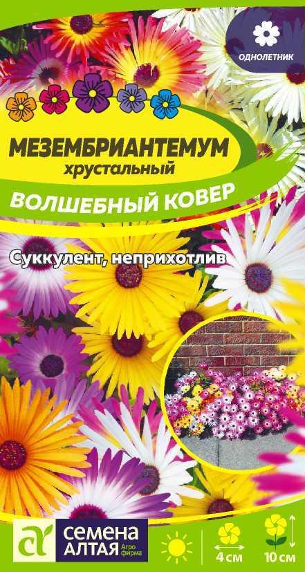 Цветы Мезембриантемум Волшебный ковер/Сем Алт/цп 0,1