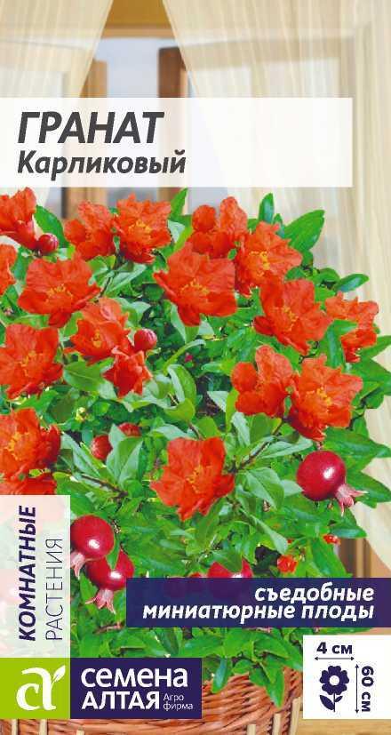 Цветы Гранат Карликовый/Сем Алт/цп 5 шт.
