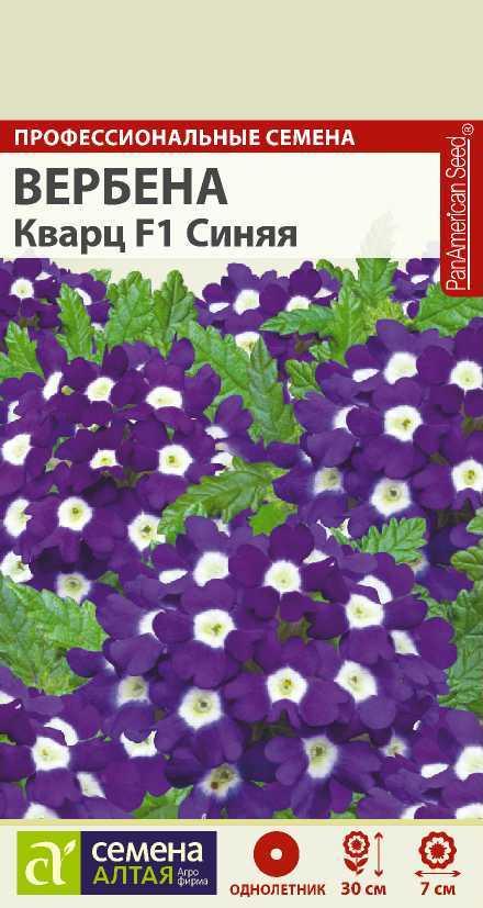 Цветы Вербена Кварц Синяя/Сем Алт/цп 5 шт